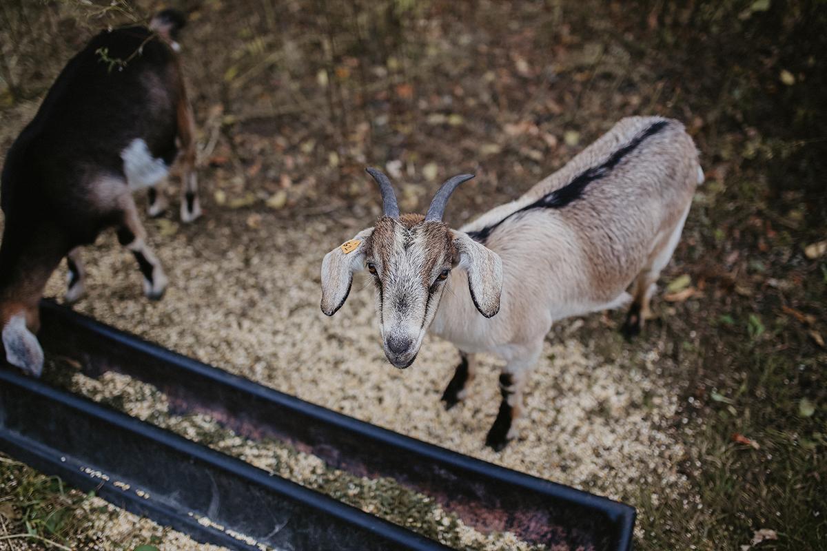 eco mariage dans une ferme locale
